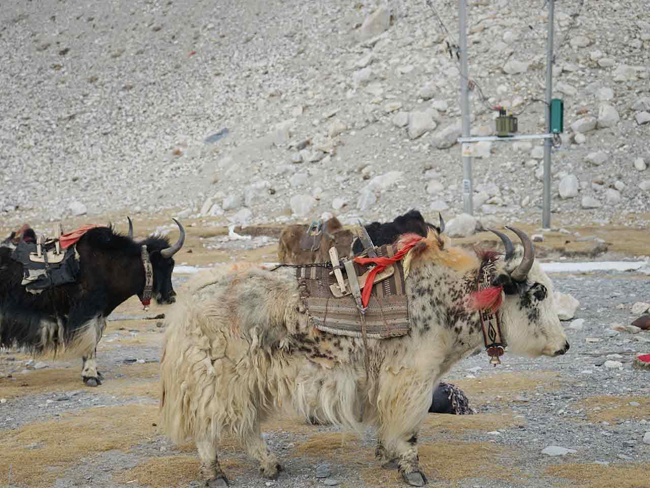 Ganden - Samye Trek Tibet